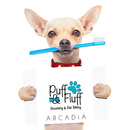 Anesthesia Free Teeth Cleaning for your Dog at Arcadia Puff & Fluff Grooming & Pet Sitting